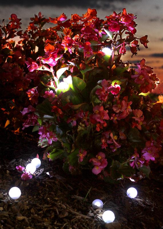 fleurs-boules